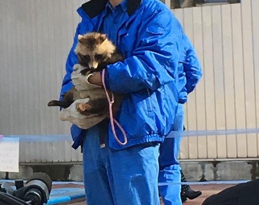 愛媛県立とべ動物園,干支送り
