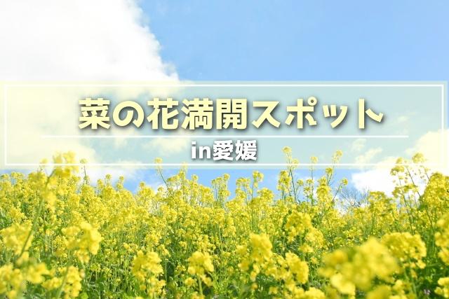 菜の花,愛媛