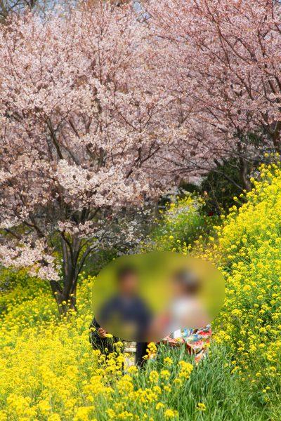 松山,お花見,石手川
