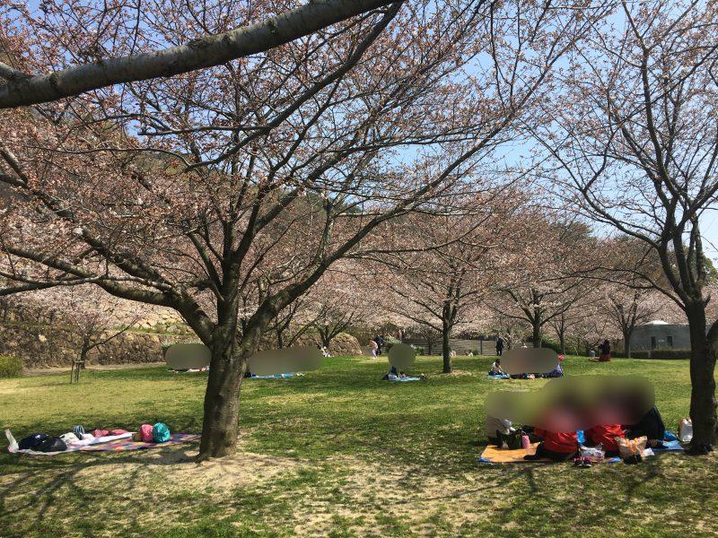 松山,総合公園,お花見