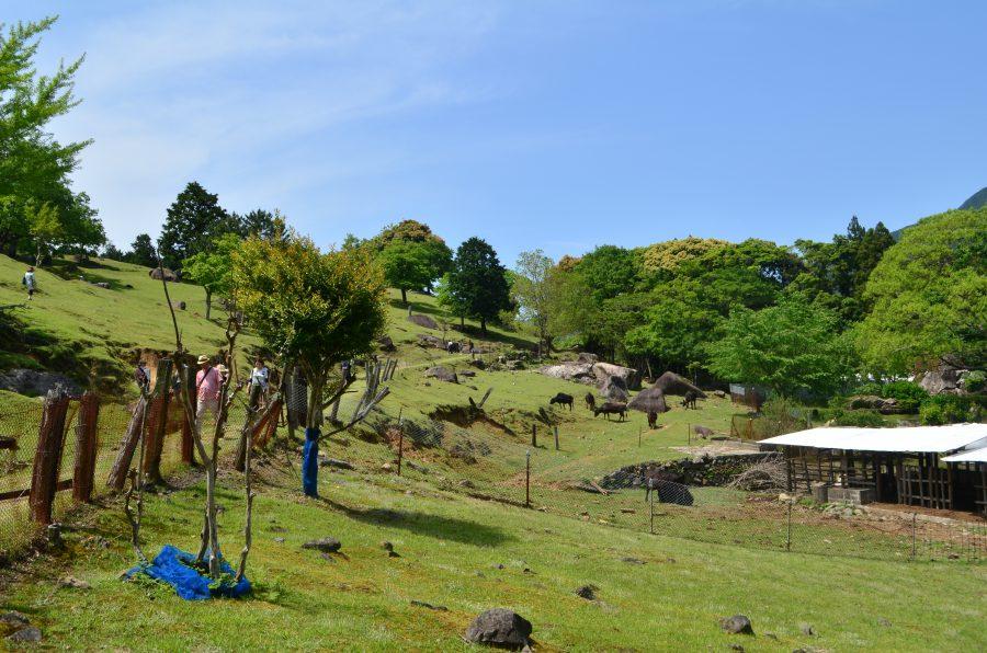 山本牧場,雰囲気