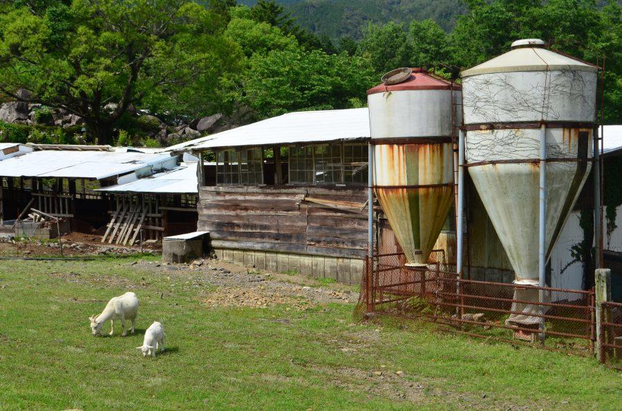 山本牧場,ヤギ