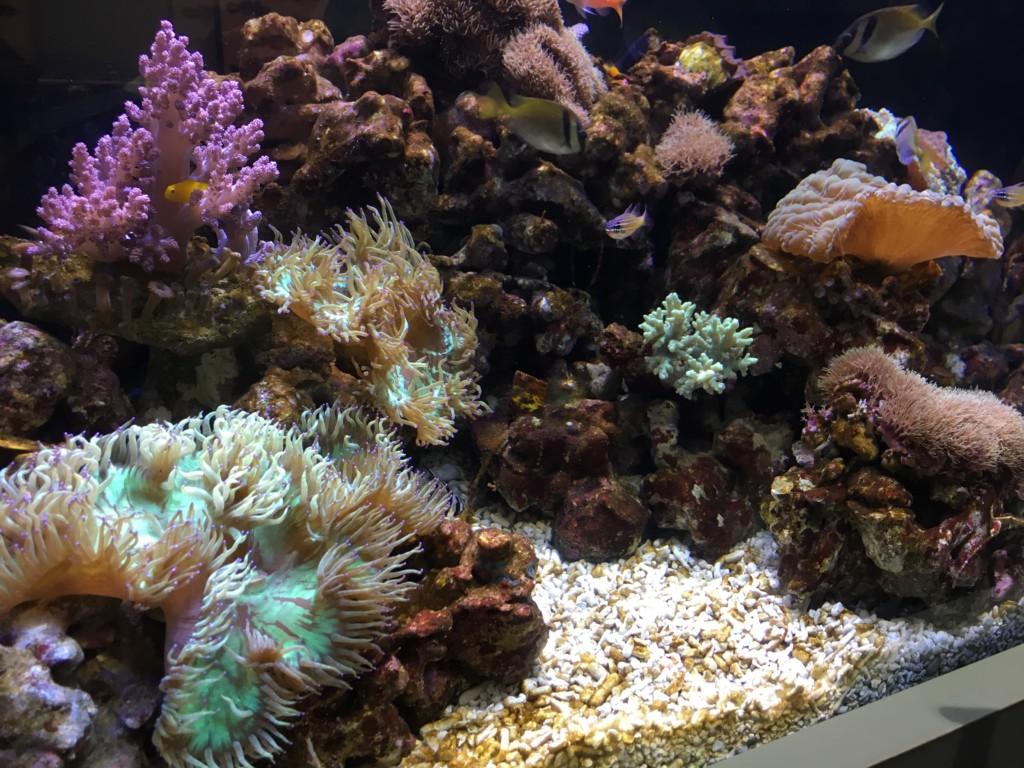 高島屋,水族館,魚