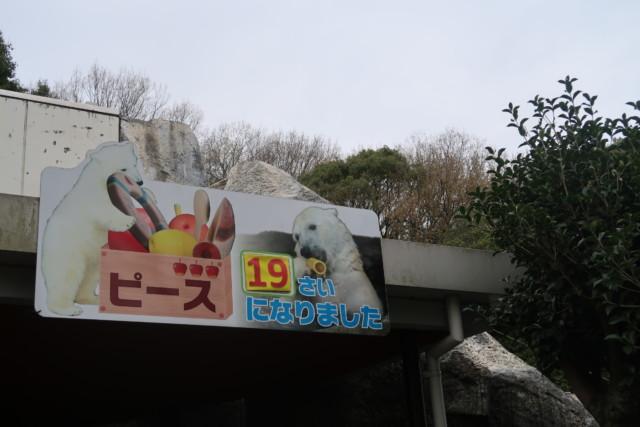 とべ動物園のしろくまピースの年齢