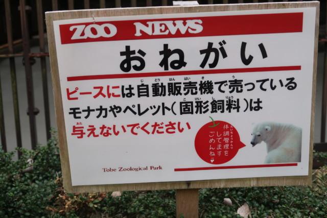 とべ動物園のしろくまピースのエサ