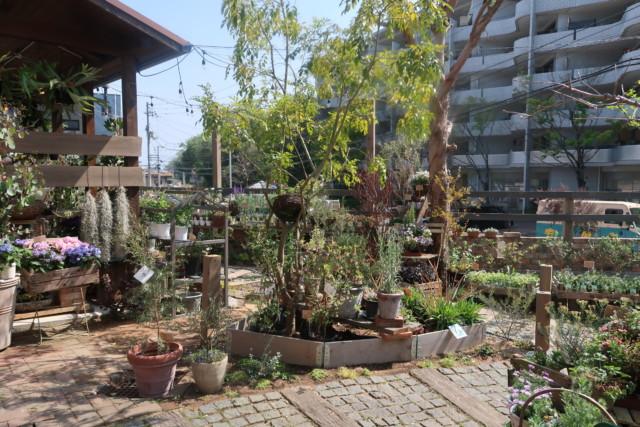 sola(松山)の植物園
