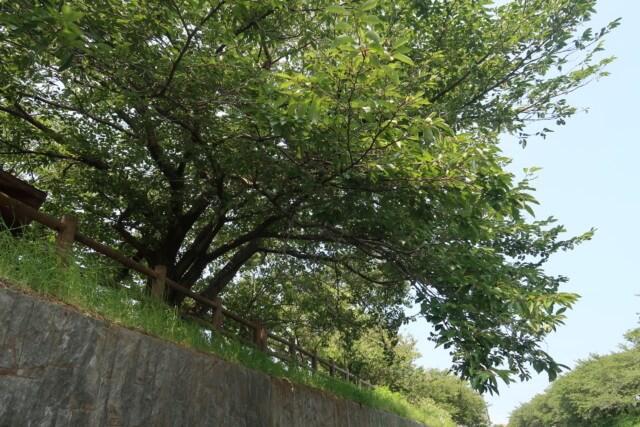 赤坂泉公園(砥部町)の木々