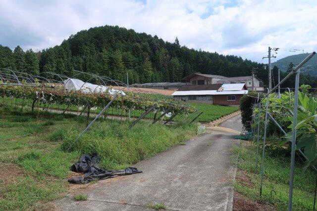 福岡ぶどう園,内子,園内