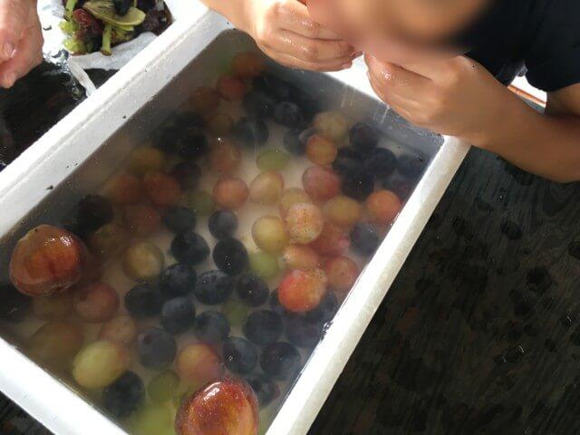 福岡ぶどう園,内子,ぶどうを食べる子供