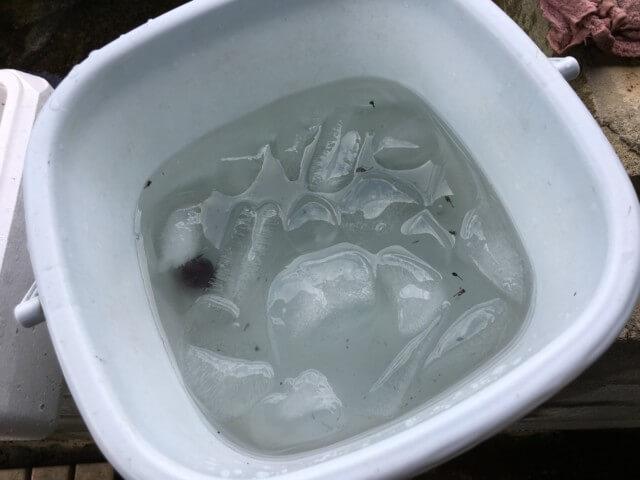 福岡ぶどう園,内子,氷