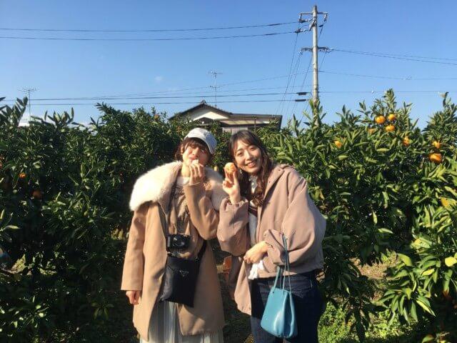 戸田果樹園,みかん狩りの様子